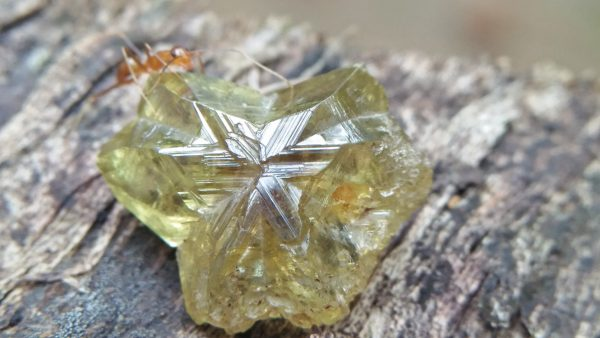 🇱🇰 CEYLON Natural Chrysoberyl Crystal 12.5mm x 10mm x 5mm dimensionstone unearthed from city of gem Ratnapura Mineral Sri Lanka Crysoberyl Crystal is the rare crystal type of gemstone family.