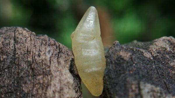 11_ceylon Natural Sapphire Crystal - Danu Group Gemstones