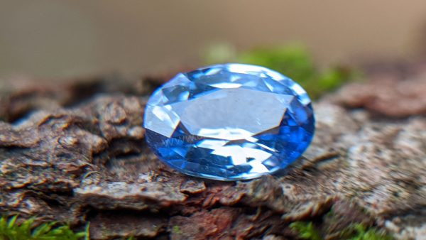 Ceylon Natural Cornflower Blue Sapphire Sri Lanka - Danu Group Gemstones