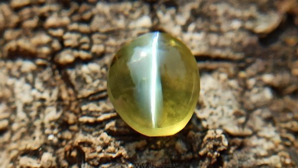 Natural Apple Green Chrysoberyl Cats Eye - Danu Group Gemstones Collection